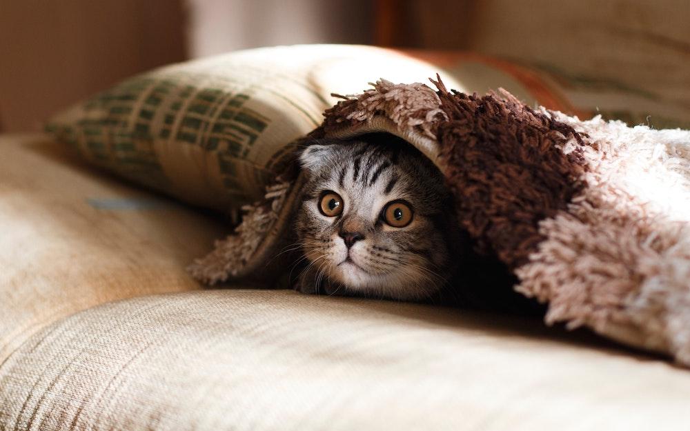 ネコちゃんも喜ぶ! エアコン清掃で快適空間に♪