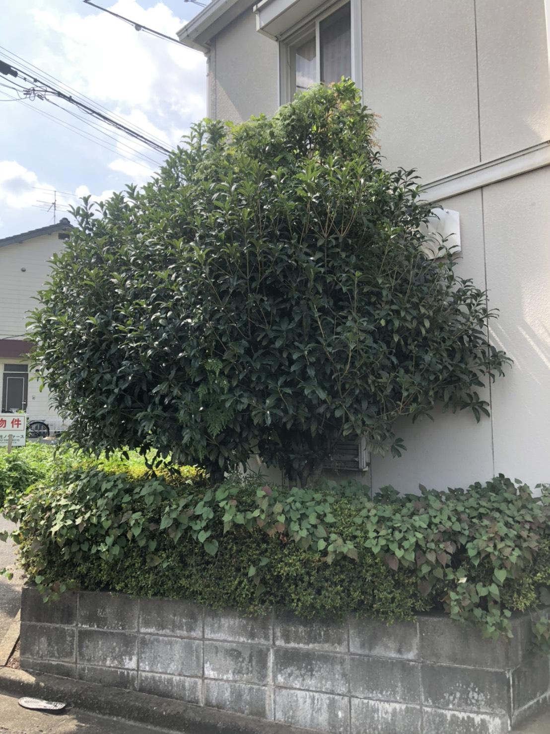 花壇ビフォー